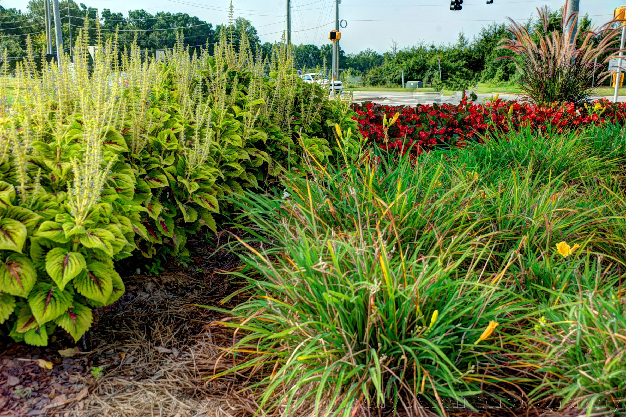 Commercial landscaping design